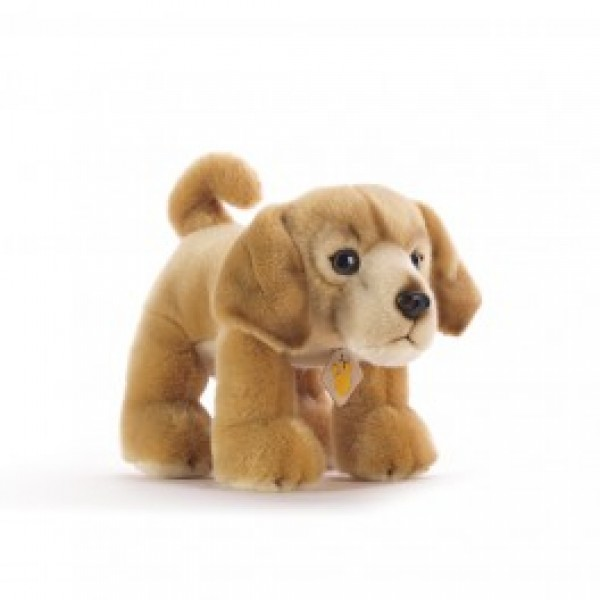 Peluche chien golden retriever 30 cm