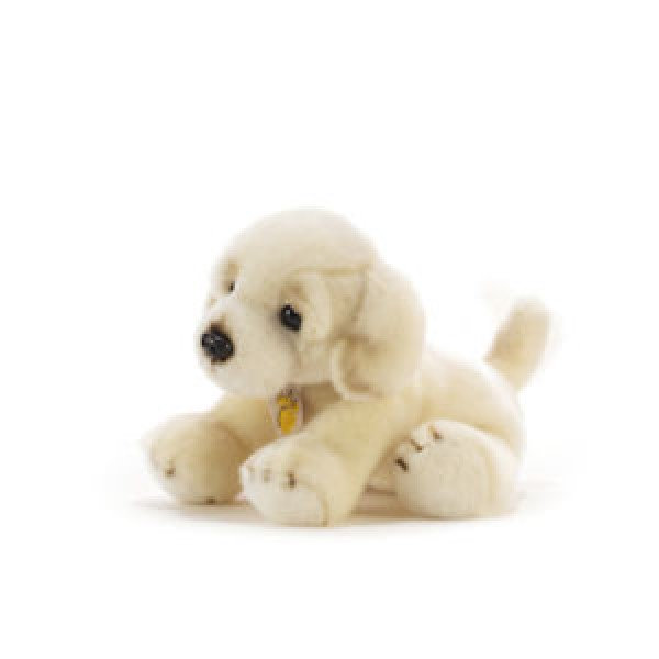 Chien Golden retriever 30 cm
