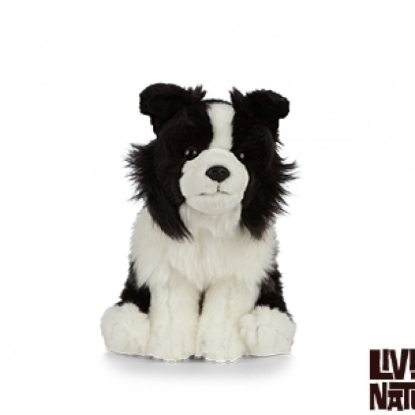 Peluche chien border collier 20 cm